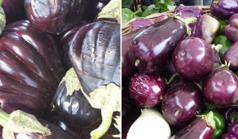 local baladi cultivated, organic aubergines