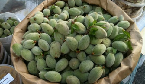 green almonds of spring