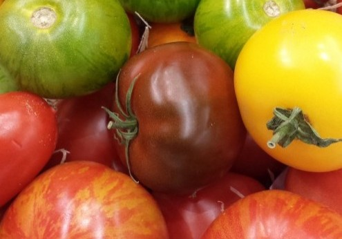 THE BEAUTIFUL COLOURS OF HEIRLOOM TOMATOES